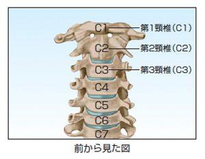 自律神経失調症に関係に深い頸椎